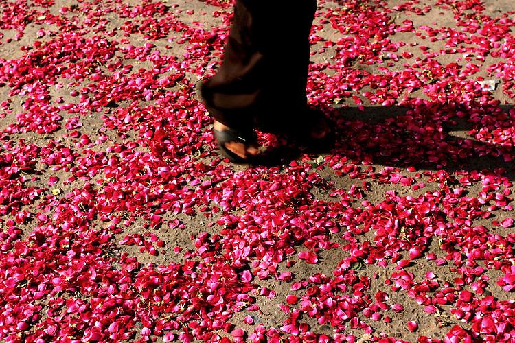 27.09.2008 Delhi(Haryana) <br /> <br /> Man walking on a petals flower.<br /> <br /> Homme marchant sur des p&eacute;tales de fleurs.