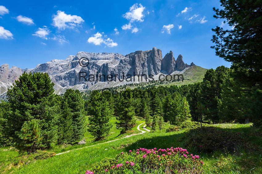 Italy, South Tyrol (Trentino - Alto Adige), Dolomites, near Selva di Val Gardena: alpine rose blossom with Sella Group at Sella Pass Road | Italien, Suedtirol (Trentino - Alto Adige), oberhalb von Wolkenstein in Groeden: Alpenrosenbluete vor der Sella Gruppe an der Sella-Joch-Passstrasse
