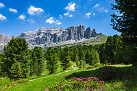 Italy, South Tyrol (Trentino - Alto Adige), Dolomites, near Selva di Val Gardena: alpine rose blossom with Sella Group at Sella Pass Road | Italien, Suedtirol (Trentino - Alto Adige), oberhalb von Wolkenstein in Groeden: Alpenrosenbluete vor der Sella Gruppe an der Sella-Joch-Passstrasse