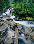 Mount Rainier National Park, WA<br /> Paradise River waterfalls in a spruce, fir forest
