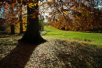 Trees in Autumn leaf, Dunham Massey, Trafford, Greater Manchester.