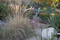 Path through demonstration garden with Muhlenbergia rigens, Deer Grass and Opuntia ficus-indica; Living Desert Garden, Palm Springs, California.
