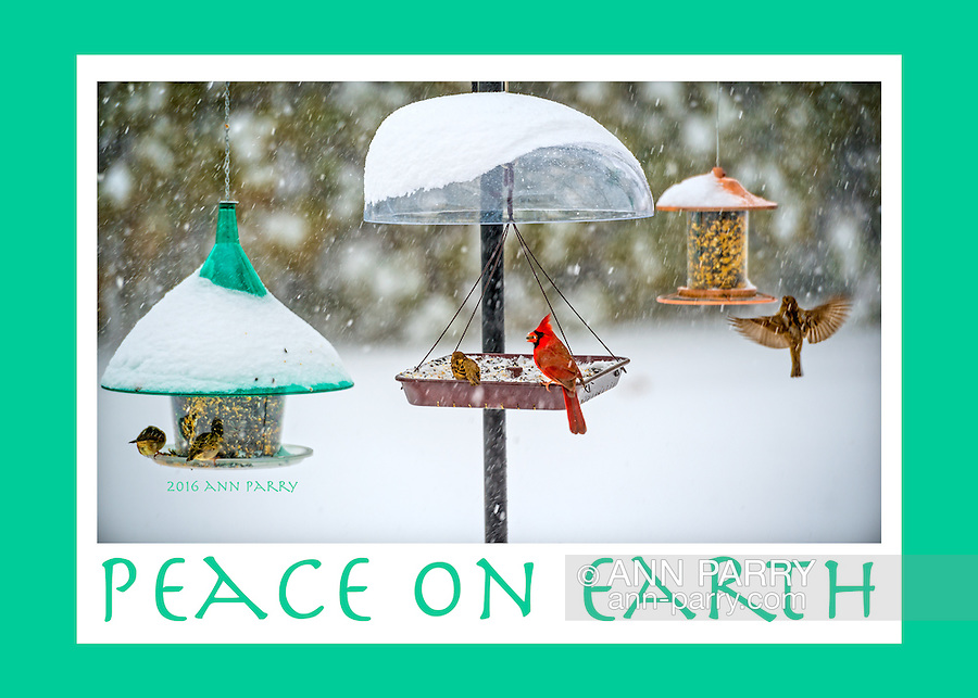 Peace on Earth holiday card with photos of cardinals and other birds at outdoor feeders during snowfall