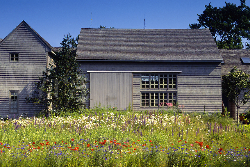 Cape Cod house and meadow of wildflowers.