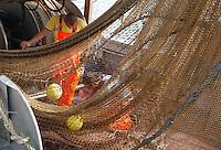 Pescatori al porto di Fiumicino scaricano il pescato. .Fishermen at the fish port unload their catch, Fiumicino......