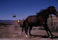 Sensing a trap, a wild stallion hits the brakes during a mustang roundup near Eureka, Nevada. Some 50,000 wild horses roam public lands, a legacy of Spanish explorers. To keep their numbers in check, BLM corrals as many as 10,000 a year for its wild horse adoption program.