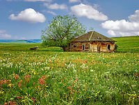 Old abandoned home with field of wildflowers. Zumwalt Prairie Nature Conservancy, Oregon