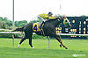 Cement Clement setting a New Track Record while winning at Delaware Park on 5/27/15