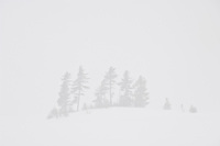 Pine trees on an island in a frozen lake withstand a blizzard on the Keweenaw Peninsula near Copper Harbor Michigan.
