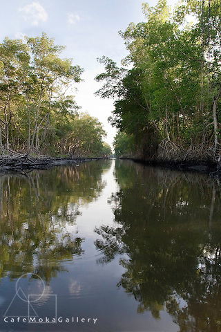 Evening light and reflections over the Caroni Swamp