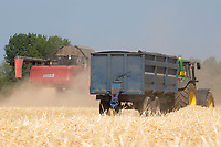 Harvesting Infinity Winter Barley at 13.5% moisture on light gravel land at N A Garford &amp;Sons,Maxey in Cambridgeshire <br /> &copy;Tim Scrivener Photographer 07850 303986<br />      ....Covering Agriculture In The UK....