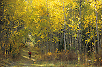 A mountain biker rides through an aspen grove in Jackson Hole, Wyoming.