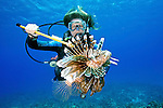 Diver & Lionfish, Grand Cayman