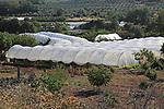 Polytunnel cloches in farmland in Rio Tietar valley, Cuacos de Yuste, La Vera, Extremadura, Spain