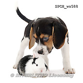 Xavier, ANIMALS, REALISTISCHE TIERE, ANIMALES REALISTICOS, FONDLESS, photos+++++,SPCHWS588,#A#