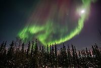 Northern Lights, aurora from Alaska photography