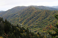 Stock photo: smoky hills covered in fall colors, rows of pine trees and the newfound gap road passing through hills.