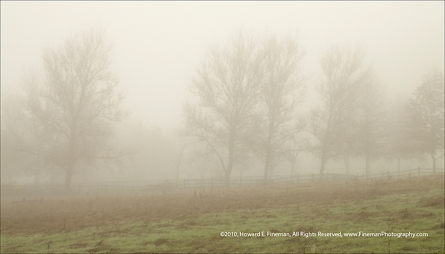 Foggy field along Rte 12 north of Sonoma