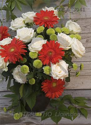 Carl, FLOWERS, nature, photos, SWLA, SWLA3041,#F# Blumen, Natur, flores, naturaleza