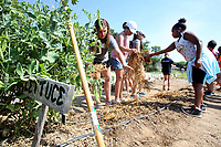 NWA Democrat-Gazette/DAVID GOTTSCHALK Students place straw mulch over freshly planted corn seeds Wednesday, June 6, 2018, at the Apple Seeds Teaching Farm in Gulley Park, as she participates in the Food Ambassadors program at the farm in Fayetteville. The week long program provides the students with the skill, knowledge and resources in gardening, nutrition and cooking so they are prepared to take a leadership role at their schools.