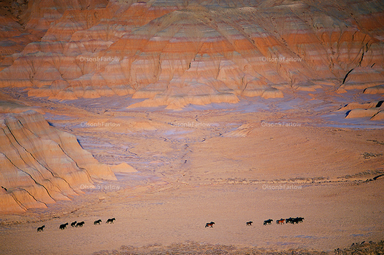A string of wild horses roam Wyoming's Red Desert beneath the Honeycomb Buttes. An estimated 47,000 wild horses roam western lands, many are descendants of Spanish horses brought to the New World in the 1500's. <br /> <br /> In the 1800's the Spanish stock began to mix with European horses favored by the settlers, trappers and miners that had escaped or were turned out by their owners. ....Seeming barreness belies the area's importance as a habitat for some 350 wildlife species, including pronghorn antelope: One of the world's largest herds lives here.