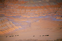 A string of wild horses roam Wyoming's Red Desert beneath the Honeycomb Buttes. An estimated 47,000 wild horses roam western lands, many are descendants of Spanish horses brought to the New World in the 1500's. <br />