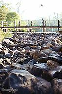 Image Ref: CA346<br /> Location: Margaret River<br /> Date: 13 Jan 2016