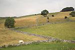 Landscape with tree Peak district national park, Derbyshire, England