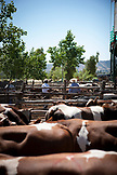 CHILE, Lolol, Traditional Rodeo in town of Lolol, part of the Colchagua Valley