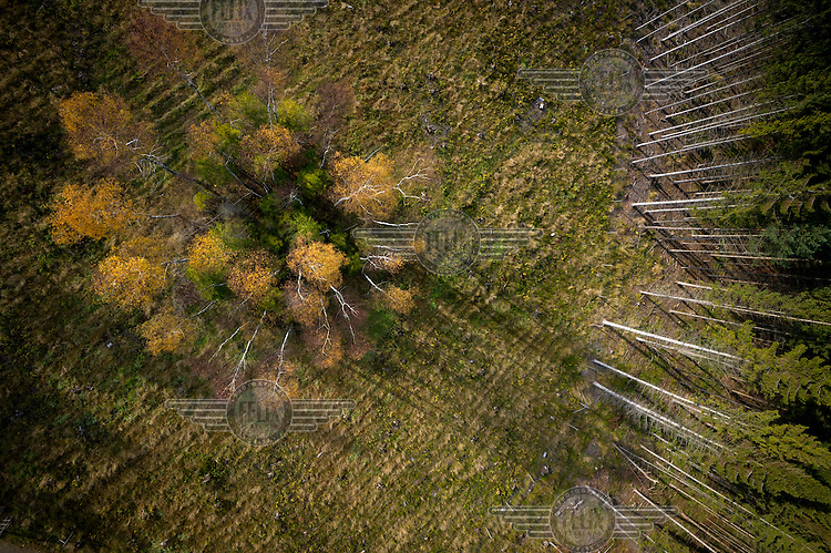 A view over a forest with trees changing colour in Autumn in Kashubia.