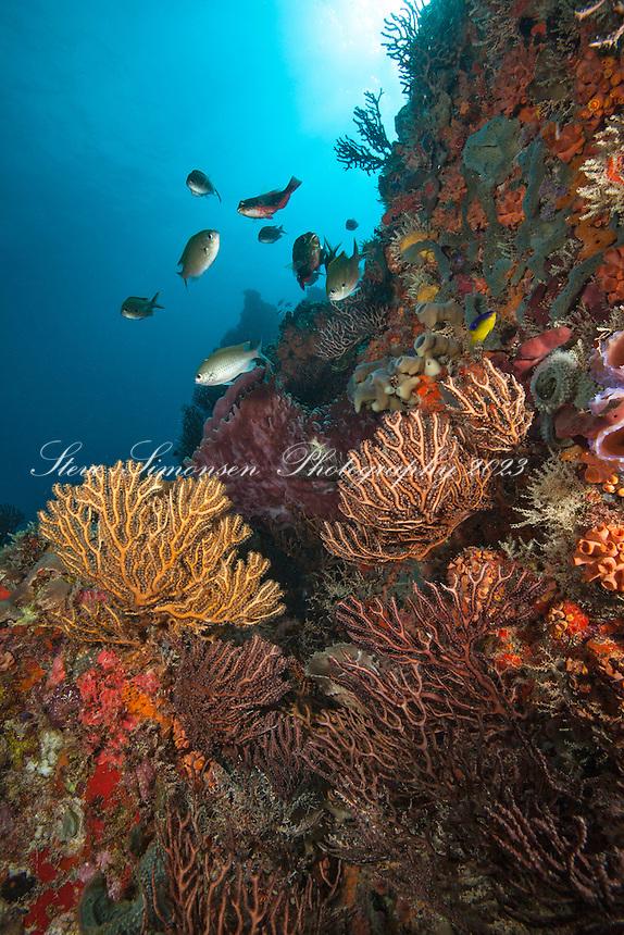 Underwater reef scenic<br /> Bull Rock<br /> Virgin Islands