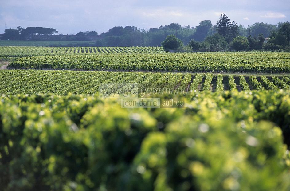 Europe/France/Aquitaine/33/Gironde/Env d'Arcins: Le vignoble du Haut-Médoc