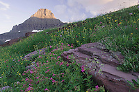 Mount Reynolds and alpine tundra with wildflowers, Leafy Arnica, Pink Monkeyflower, Logan Pass, Glacier National Park, Montana, USA