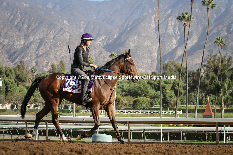 October 27, 2014: Danette exercises in preparation for the Breeders' Cup Juvenile Fillies at Santa Anita Park in Arcadia, California on October 27, 2014. Zoe Metz/ESW/CSM