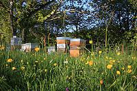 Colorful hives///Des ruches colorées