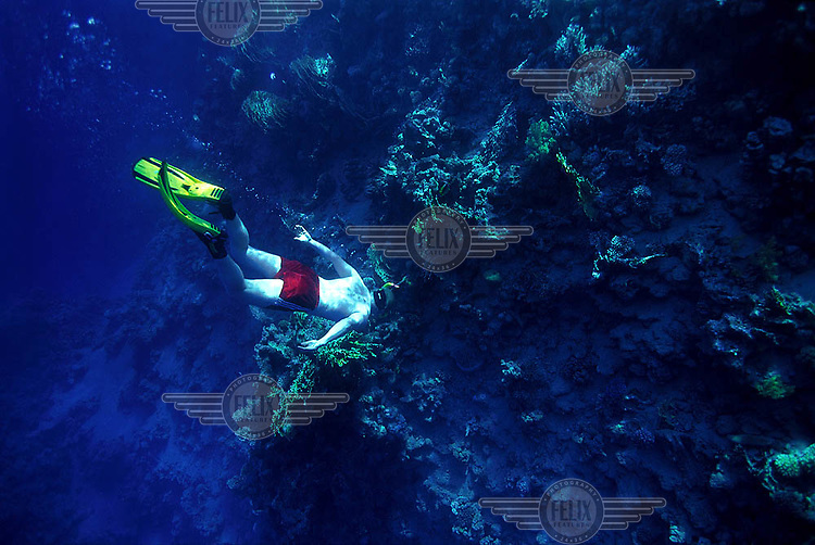 Tourist snorkel on a coral reef in the Red Sea. The clear waters of the Red Sea are popular with divers and snorkelers. Laws have been introduced to protect the underwater environment, and lessen the impact of tourism on corals and other marine life.