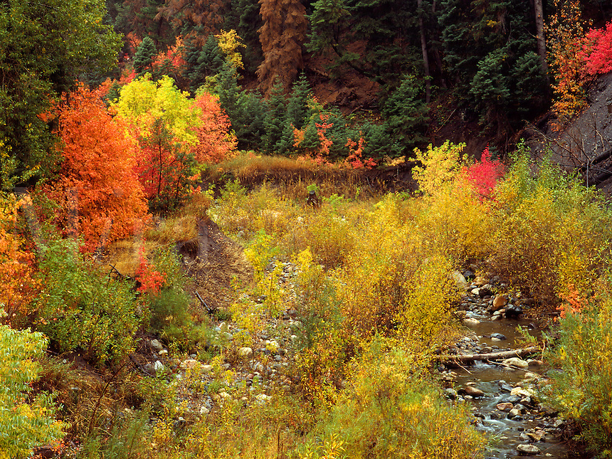 Art in Nature 9409-0222 - Nebo Creek, in Payson Canyon in autumn, surrounded by colorful fall foliage. Wasatch Range, Rocky Mountains, Utah.