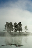 Morning fog rises from Yellowstone R. in the Hayden Valley-Yellowstone National Park, Wyoming