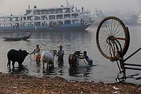BANGLADESH Dhaka, ferry ship terminal Sadarghat at Buriganga river, people washing cows in the river / BANGLADESCH Dhaka , Faehrschiff Terminal Sadarghat, Menschen waschen Kuehe im Buriganga Fluss