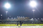 November 1, 2018: A horse looks on at Churchill Downs on November 1, 2018 in Louisville, Kentucky. Jamey Price/Eclipse Sportswire/CSM