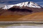 Flamingos, Andean and Chilean species, Eduardo Avaroa National Reserve, Bolivia
