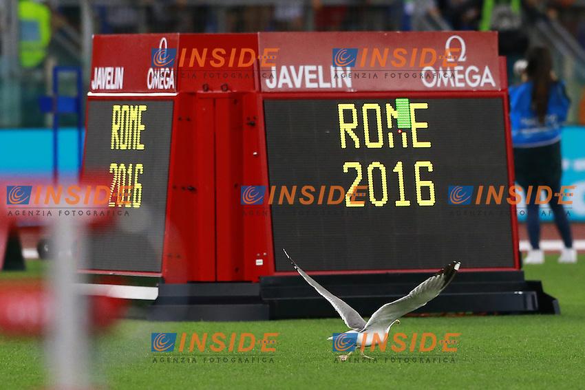 Gabbiani al Diamond League Golden Gala Roma 2016  <br /> Roma 02-06-2016 Stadio Olimpico.<br /> IAAF Diamond League 2016<br /> Atletica Legera <br /> Golden Gala Meeting - Track and Field Athletics Meeting<br /> Foto Cesare Purini / Insidefoto