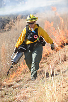 NWA Democrat-Gazette/FLIP PUTTHOFF <br />LINE OF FIRE<br />Anita Overbey with the Arkansas Forestry Commission lights grass on fire Tuesday April 10 2018 during a prescribed burn at the Northwest Arkansas Community College Nature Area Living Laboratory. Small grassland areas of the tract were burned primarily to eliminate invasive species, said Ellen Turner, faciiltator of the outdoor living laboratory. Fire also helps promote growth of native prairie seeds which have been planted in the areas, she said.
