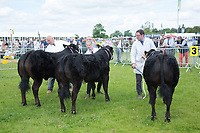Rutland County Show 2017<br /> Picture Tim Scrivener 07850 303986<br /> &hellip;.covering agriculture in the UK&hellip;.