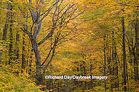 64776-01318 Trees in fall color Schoolcraft County Upper Peninsula Michigan