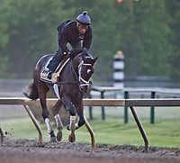 BALTIMORE, MD - MAY 14: Kentucky Derby winner Always Dreaming gallops on the track after exercising in preparation for the Preakness Stakes next week at Pimlico Race Course on May 14, 2017 in Baltimore, Maryland.(Photo by Scott Serio/Eclipse Sportswire/Getty Images)