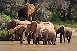 Elephants at Uaso Nyiro river in Samburu National Reserve, Kenya.