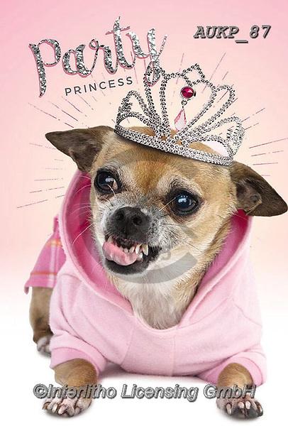 Samantha, ANIMALS, REALISTISCHE TIERE, ANIMALES REALISTICOS, funny photos, photos+++++,AUKP87,#a#, EVERYDAY ,party