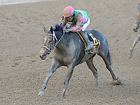Sippican Harbor (no. 6) wins the Spinaway Stakes (Grade 1), Sep. 1, 2018 at the Saratoga Race Course, Saratoga Springs, NY.  Ridden by Joel Rosario, and trained by Gary Contessa, Sippican Harbor  bested Restless Rider (No. 11).  (Bruce Dudek/Eclipse Sportswire)
