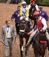 DEL MAR, CA - NOVEMBER 03: Forever Unbridled #6, ridden by John Velazquez, walks in the paddock prior to winning the Longines Breeders\'92 Cup Distaff on Day 1 of the 2017 Breeders' Cup World Championships at Del Mar Thoroughbred Club on November 3, 2017 in Del Mar, California. (Photo by Casey Phillips/Eclipse Sportswire/Breeders Cup)
